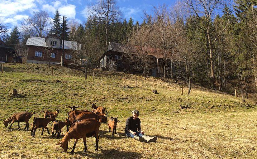 zlámaná kysuce jaro jar předjaří kozy koza hnědá pastvina