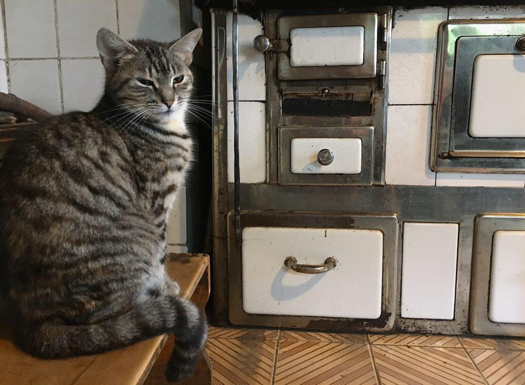 kočka domácí mourovatá pec