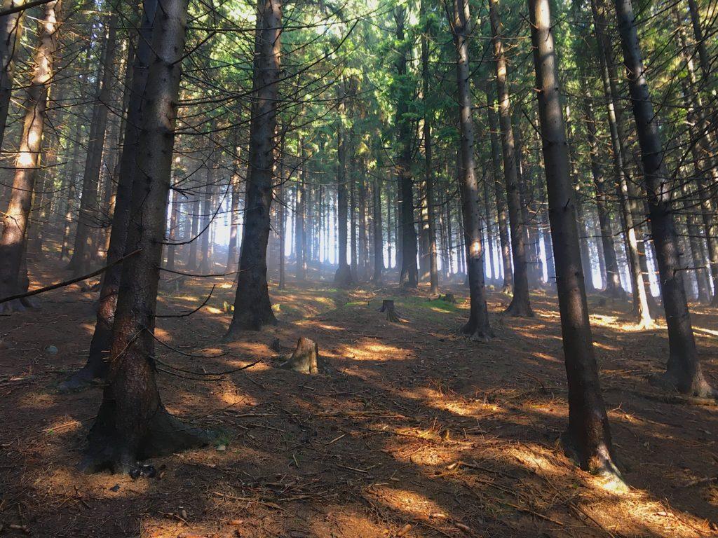 les smrkový slunce podzim jeseň kysuce